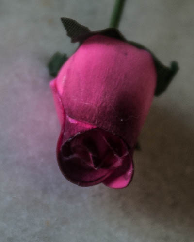 Pink Burgundy Wood Rose