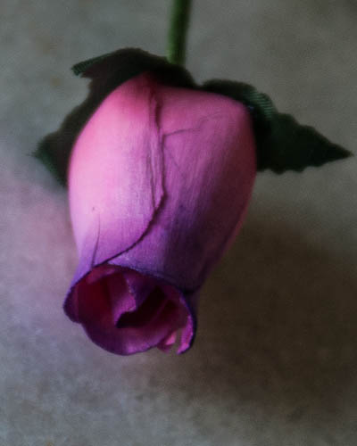 Pink with Purple Wooden Rose