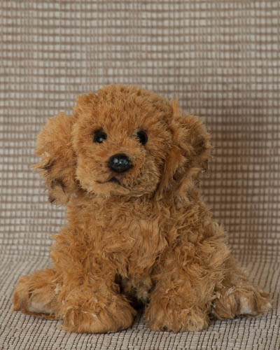 Balsam Fir <br /> Puppy Rescue Lg Golden