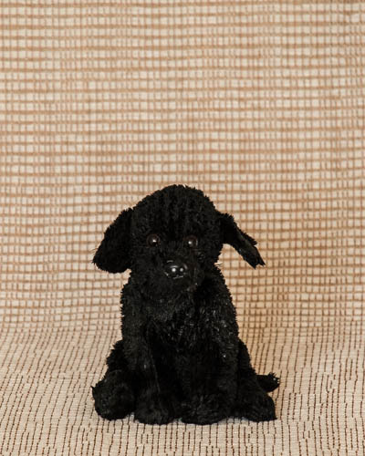 Baby Fresh <br /> Blind Dog Rescue Sm Black Lab